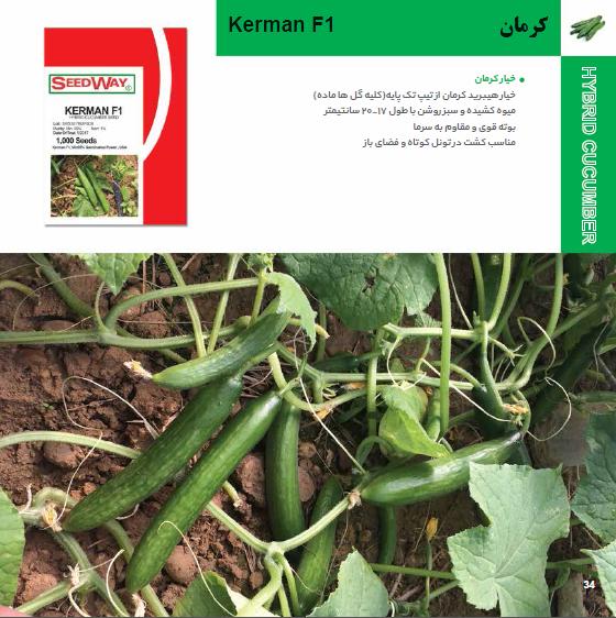 بذر خیار کرمان