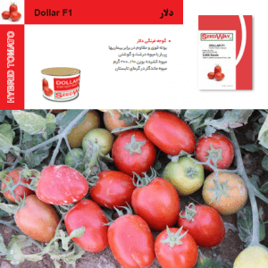 بذر گوجه فرنگی دلار