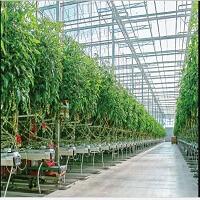 فروش بذر گلخانه ای