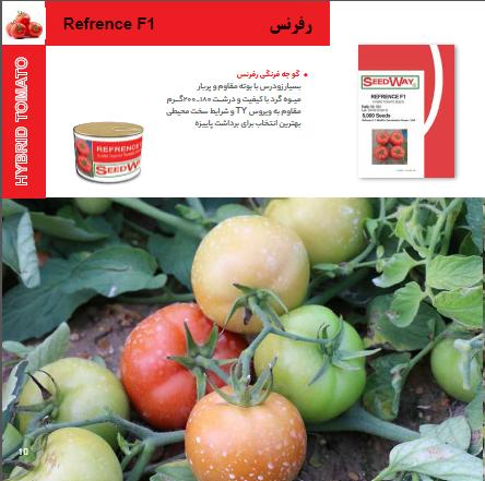 بذر گوجه فرنگی رفرنس