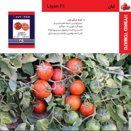 بذر گوجه فرنگی لیان