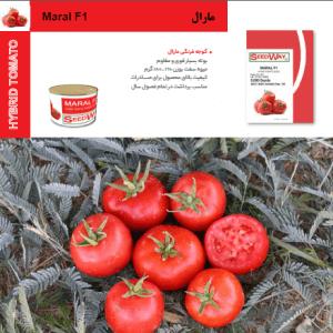 بذر گوجه فرنگی مارال