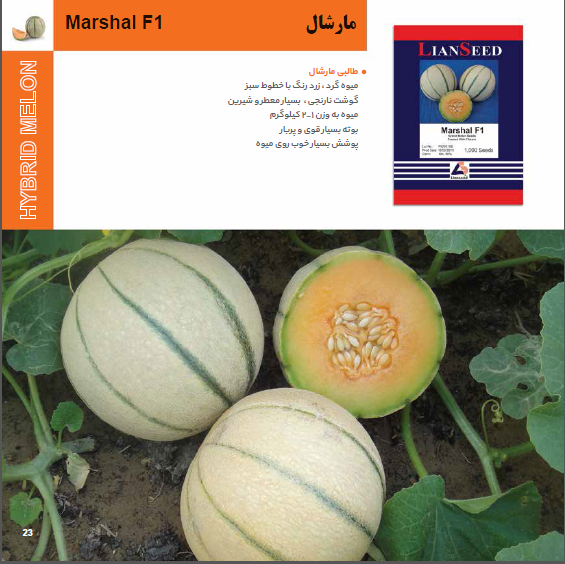 بذر طالبی مارشال